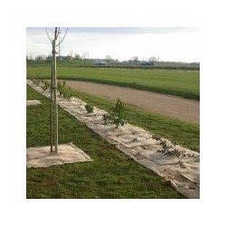 Toile Paillage Biodégradable Jute & Sisal Rouleau de 25m