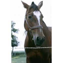 Clôture câble lisse, spéciale enclos pour chevaux