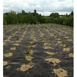 Feutre de Paillage 190 g/m2 PLA 100% Biodégradable - Rouleau de 100m