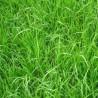 RGA Bio Premium intermédiaire diploïde sac 20kg
