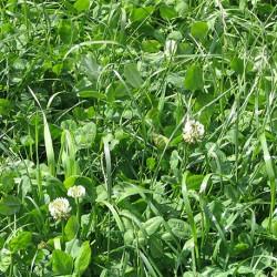 Mélange Prairie Bio GT5 longue durée terrain sec sac 10kg
