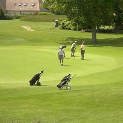 Gazon Professionnel Signature 100kg - 2000m² pour green de golf