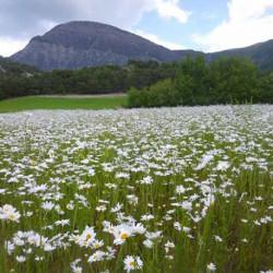 Composition Fleurs de Montagnes 5kg - 2500m²