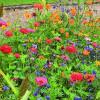 Mélange de graines de semence pour prairie fleurie élégante. Idéal pour la confection de bouquets. A découvrir Agrifournitures