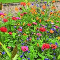 Mélange Prairie fleurie Elégance