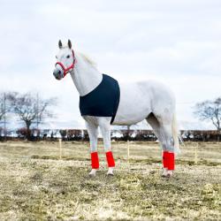 Protection épaule pour cheval ultra élastique en lycra