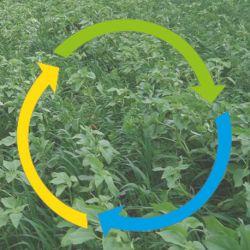 CIPAN restructurant Engrais Vert - Terragold TG1 Humus sur agrifournitures.fr