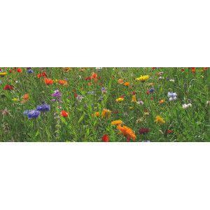 Mélanges prairies fleuries