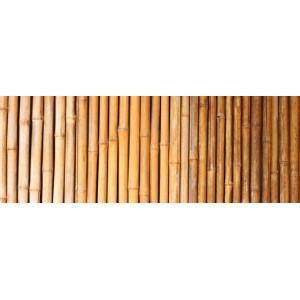 Tuteurs bambou palissage