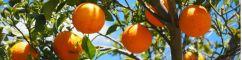 Engrais fruits & légumes