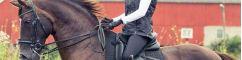 Filets, rênes & bridons cheval