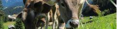 Hygiène & soin du bétail