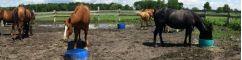Mangeoires à bétails & chevaux